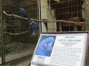 Placas com informações dos animais como nomes popular e científico, regiões que vivem e principais hábitos auxiliam os visitantes na identificação das espécies (Foto: Eduardo Oliveira)