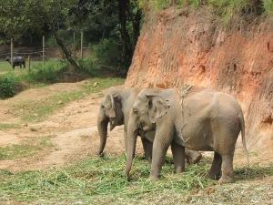Elefantes convivem em um espaço que tenta reproduzir - dentro de certos limites, claro - seu habitat natural (Foto: Eduardo Oliveira)