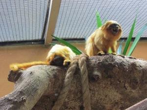 A preservação da fauna brasileira é levada a sério no vistoso parque (Foto: Eduardo Oliveira)