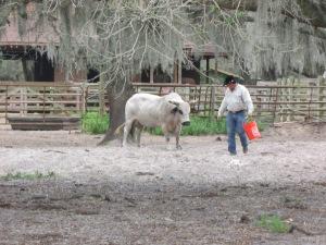 Este cara aí, o Dust, é um dos muitos fazendeiros na região de Kissimmee, fornecedor de touros para o rodeio da cidade e tem uma qualidade de vida... (Foto: Eduardo Oliveira)